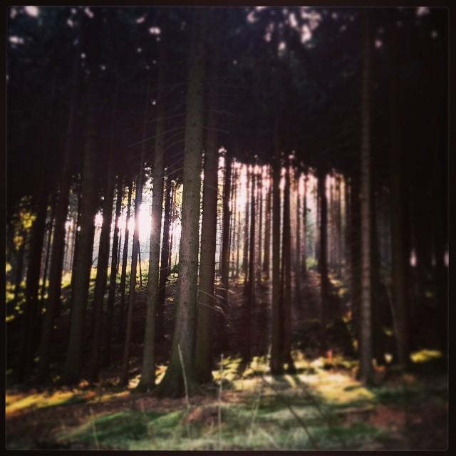 Wiosna w listopadzie :)#gorykaczawskie #okole