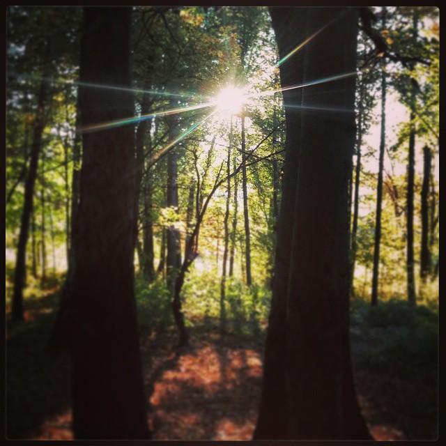 Light is everything!#light #swiatlo #las