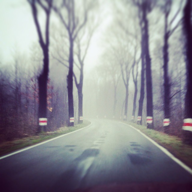 Step after step in nonspecific way#road #fog #mgla #droga