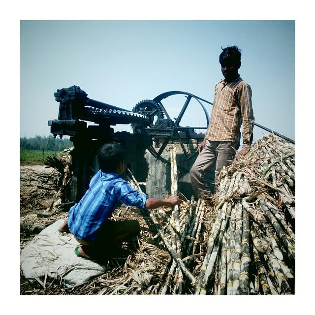 W cukrowni#india #uttarpradesh #sugar #cukier