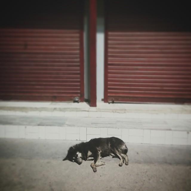 Nocą w Rishikeshu#rishikesh #india #dog