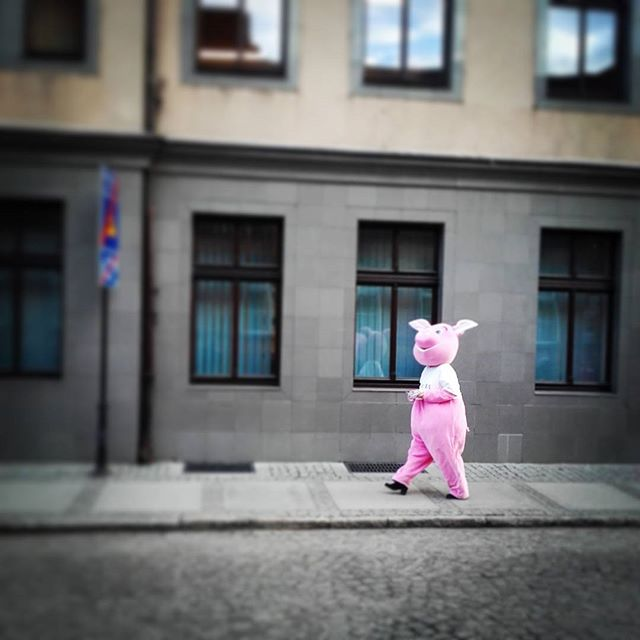 #Wschowa wita mnię uprzejmię :)#swiniewkosmosie ;)
