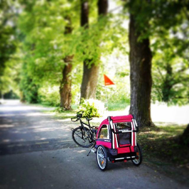 Lipy już kwitną ...#nordiccab #wycieczka #bikeovo