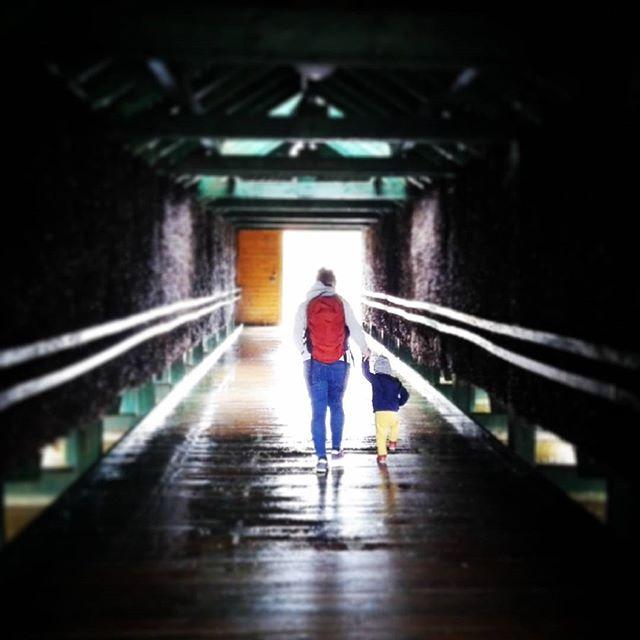 I poszły w stronę światła ...#goldap #teznie