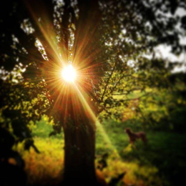 #dobranoc #slonce #ciszapoburzy #drzewo