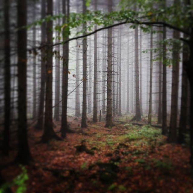 #szczeliniec #gorystolowe #las #mgla #fog #poland #forrest #dark