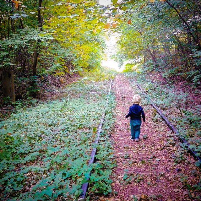 #jesien przyszła ... znowu :)#kolorowo jak #zawsze #spacer warty każdej chwili ...